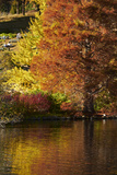 Autumn Colour in Pond, Botanic Gardens, Dunedin, Otago, South Island, New Zealand Photographic Print by David Wall