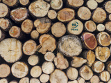 Sustainable Forestry Log Harvest, Dolomites, Rosengarten, South Tyrol, Italy Photographic Print by Martin Zwick