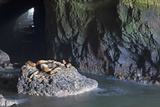 Sea Lion Caves, Resting Sea Lions, Oregon, USA Photographic Print by Jamie & Judy Wild