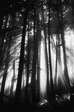 Sunlight Through Trees, Mount Rainier National Park, Washington, USA Fotografisk tryk af Adam Jones