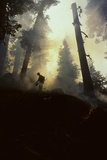 Forest Fire, Sequoia and Kings Canyon National Park, California, USA Photographic Print by Gerry Reynolds