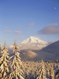Mt Hood with Frost Trees, Mt Hood National Forest, Oregon, USA Photographic Print by Stuart Westmorland