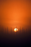 View of Sunrise over Spruces Trees, Fairbanks, Alaska, USA Fotografisk trykk av Hugh Rose