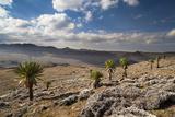 Mountain Ridge, Mount Batu, Giant Lobelias, Bale Mountains, Ethipia Photographic Print by Martin Zwick