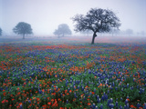 View of Texas Paintbrush and Bluebonnets Flowers at Dawn, Hill Country, Texas, USA Photographic Print by Adam Jones