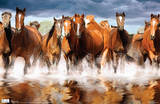 Horses Galloping Photograph Poster Posters