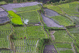 Terraced Vegetable Farm, Banaue, Ifugao Province, Philippines Photographic Print by Keren Su