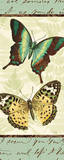 Butterfly Patchwork I Posters by  Pela