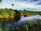 Mangrove Wetland Habitat, Merritt Island National Wildlife Refuge, Florida, USA Photographic Print by Adam Jones