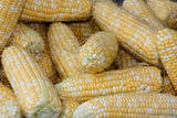 Fresh Corn at a Farmers' Market, Savannah, Georgia, USA Photographic Print by Joanne Wells
