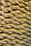 Close Up of Cone on a Sago Palm, Savannah, Georgia, USA Photographic Print by Joanne Wells
