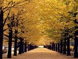 Path through The Trees - Reprodüksiyon
