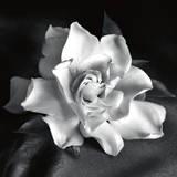 Gardenia Poster von Debra Van Swearingen