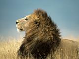 Simba His Majesty Affiche