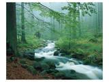 Forest Brook - Birinci Sınıf Giclee Baskı