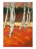 SilverBirch II Premium Giclee Print by Graham Reynolds