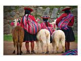 Peruvian Indios with Lamas Giclee-tryk i høj kvalitet