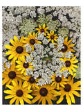 Wildflowers black eyed Susans Queen Ann Lace Premium Giclee Print