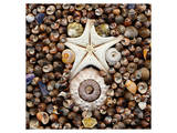 Urchin Star Sea Shells Wydruk giclee premium