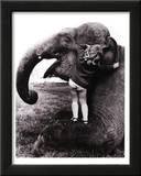 John Drysdale (An Elephant Never Forgets) Art Poster Print Prints
