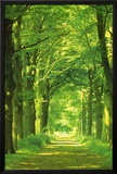 Forest Path Posters by Hein Van Den Heuvel