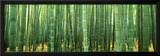 Japan (Bamboo Forest) Prints