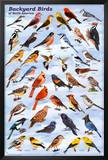 Backyard Birds Educational Science Chart Poster Photo