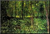 Vincent Van Gogh Trees and Undergrowth Forest Art Print Poster Mounted Print