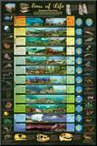 Eras of Life Geology Educational Science Chart Poster Umocowany wydruk