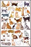 Cats of the World Educational Science Chart Poster Mounted Print
