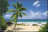 Palm Beach (Tropical Landscape Photo) Art Poster Print Mounted Print