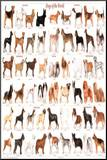 Dogs of the World Educational Science Chart Poster Mounted Print