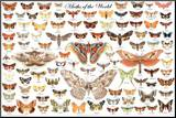 Moths of the World Educational Science Chart Poster Mounted Print