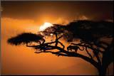 Afrikansk himmel Monteret tryk