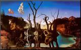 Salvador Dalí - Labutě odrážející se ve vodě jako sloni, c.1937 Reprodukce aplikovaná na dřevěnou desku