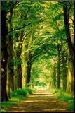 Camino de bosque Lámina montada en tabla por Hein Van Den Heuvel