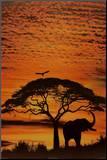 Den afrikanske himmel Monteret tryk