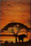 African Skies Mounted Print