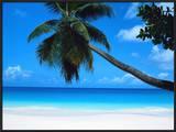 Beach and Palm, Seychelles Island Prints