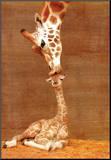 De eerste kus Kunstdruk geperst op hout