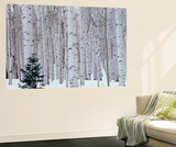 Aspen and Douglas Fir, Manti-Lasal National Forest, La Sal Mountains, Utah, USA Wall Mural by Scott T. Smith
