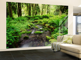 View of Old-Growth Forest, Olympic National Park, Washington State, USA Wall Mural – Large by Stuart Westmorland