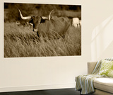 Longhorn Bull Wildlife, Oklahoma, USA Wall Mural by David Barnes