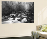 Canopy over Big Creek, Great Smoky Mountains National Park, North Carolina, USA Wall Mural by Adam Jones
