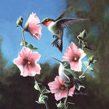 Ruby Throated Hummingbird Print by Kevin Daniel