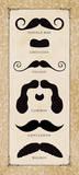 Mustache Chart Poster by Stephanie Marrott