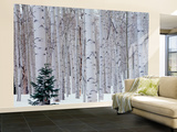 Aspen and Douglas Fir, Manti-Lasal National Forest, La Sal Mountains, Utah, USA Wall Mural – Large by Scott T. Smith