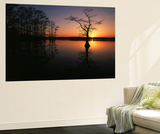 Bald Cypress Trees in Reelfoot Lake, Reelfoot National Wildlife Refuge, Tennessee, USA Wall Mural by Adam Jones