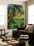 Rainforest, Olympic National Park, Washington State, USA Wall Mural by Stuart Westmorland