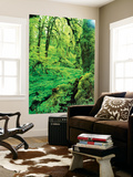 View of Lush Trees at Silver Falls State Park, Oregon, USA Wall Mural by Stuart Westmorland